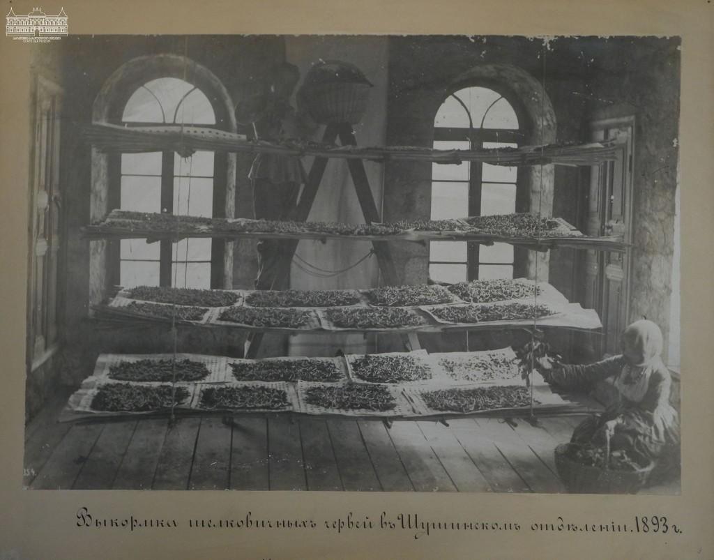 ჭიის გამოკვება შუშაში, 1893წ. აბრეშუმის მუზეუმის კოლექციიდან