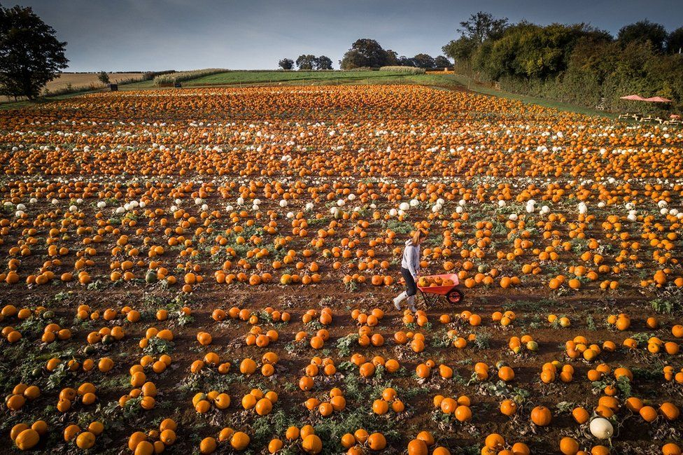 _103768664_swns_pumpkin_patch_009