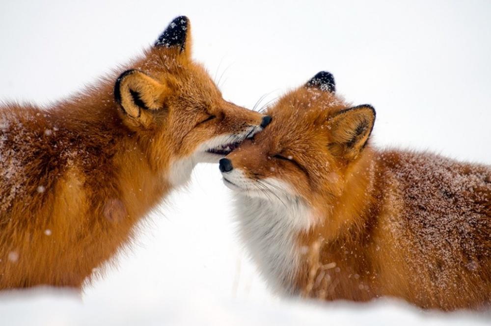 6579810-fox-1000-043a2c966f-1484729972